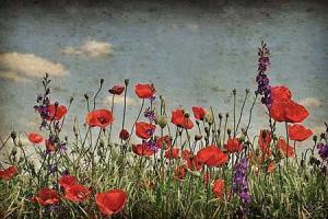 Červené kvety Fototapeta 6423 - vinylová
