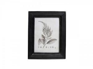 Chic Antique Botanický obrázok v rámčeku Black 18x23 cm
