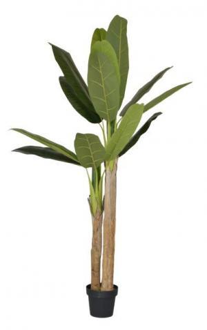 Dekorácie izbové rastliny Banánovník - 180 cm