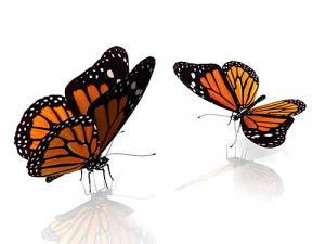 Detské obrazy Motýle zs24037