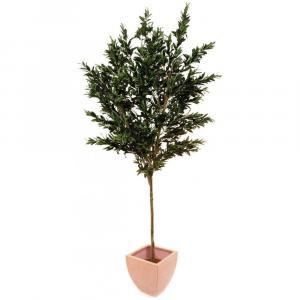 Europalms Olivovník s olivami, 250 cm