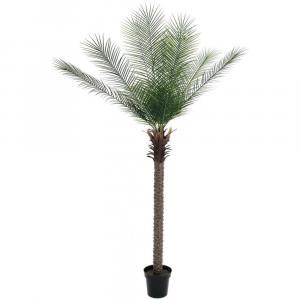 Europalms Phoenix palma deluxe, 220 cm