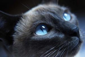 Fototapeta Mačka 3169 - vliesová