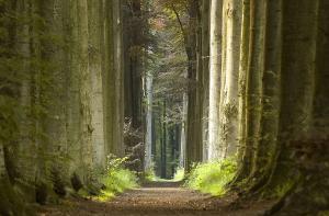 Jarné ráno v lese - fototapeta FS0708