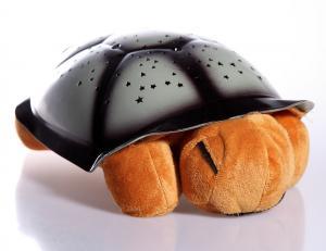 Nočná korytnačka hnedá