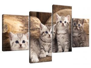 Obraz na plátne Britské mačky 120x70cm 1214A_4AA