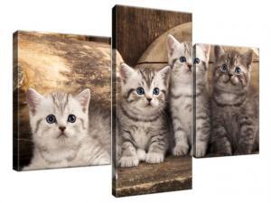 Obraz na plátne Britské mačky 90x60cm 1214A_3B