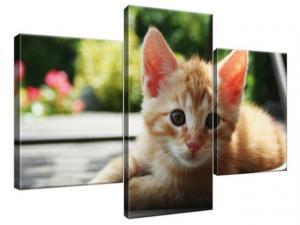 Obraz na plátne Ryšavá mačka - Mathias Erhart 90x60cm 1584A_3B