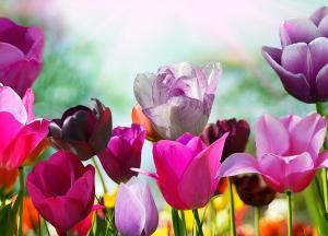 Pekné jarné kvety - fototapeta FM0721