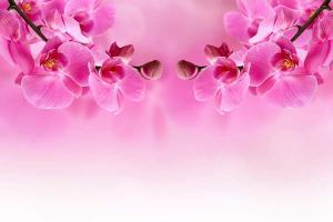 Ružová tapeta - Orchidea 267 - vliesová