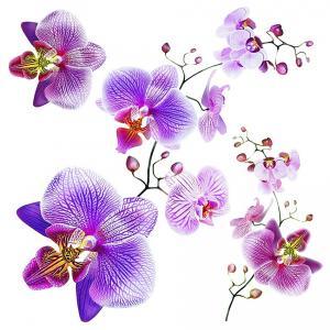 Samolepiaca dekorácia Orchids, 30 x 30 cm