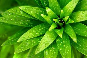 Tapeta do obývačky Zelený kvet 18497 - vliesová