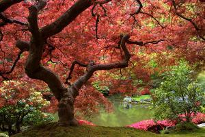 Tapeta Jeseň v lese 3250 - latexová