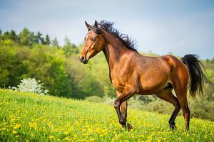 Tapeta Kôň na lúke 29254 - vliesová