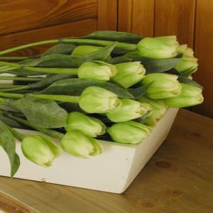 Tulipán zelený 40cm