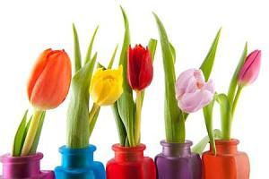 Tulipány Fototapeta 6338 - latexová