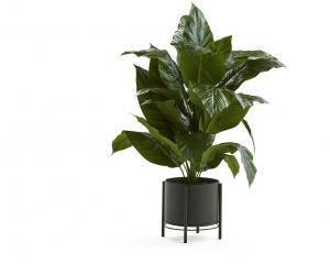 Umelá rastlina: Lopatkovec, 1500 mm, čierny oceľový kvetináč na podstavci