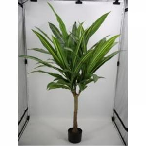 Umělá rostlina Dracena Fragrans 180cm