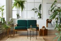 Zelená pohovka v obývačke s izbovými rastlinami