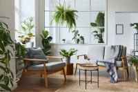 Retro pohovka a kreslo v obývačke s izbovými rastlinami