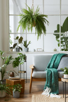 Sivá pohovka so zelenou dekou a izbovými rastlinami