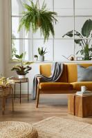 Žltá retro pohovka v obývačke s izbovými rastlinami
