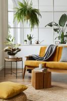 Žltá pohovka a okrúhly odkladací stolík s rastlinami