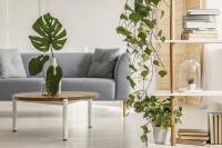 Sivá pohovka a okrúhly stolík v obývačke s izbovými rastlinami