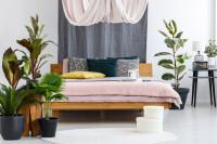 Drevená manželská posteľ v spálni s izbovými rastlinami