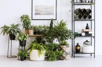 Čierne kovové regále a stolík s izbovými rastlinami
