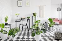 Kovový písací stôl v čiernobielej pracovni s rastlinami