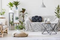 Pohovka a kovový stolík s izbovými rastlinami