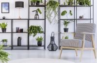 Kreslo s podrúčkami a izbové rastliny na kovových regáloch