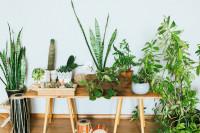 Drevená lavica s rastlinami v keramických kvetináčoch