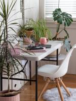 Biela stolička a písací stôl s izbovými rastlinami