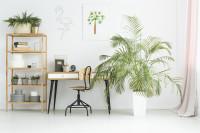 Písací stolík so stoličkou, regál a veľká izbová rastlina