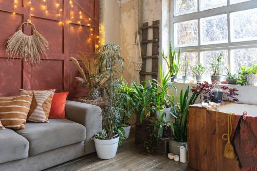 Pohovka a izbové rastliny v bohémskej obývačke
