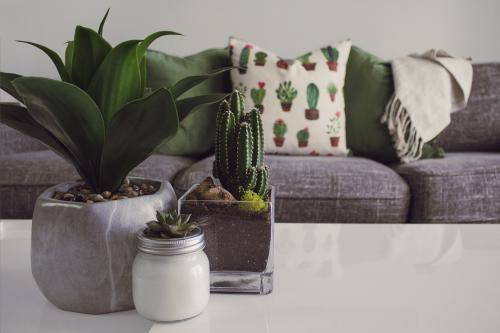 Sivý gauč s vankúšmi a dekou, konferenčný stolík a izbové rastliny