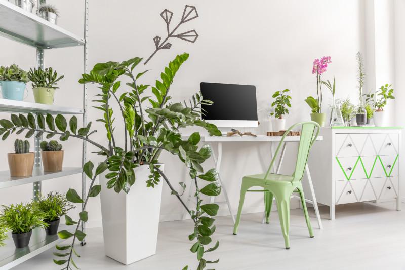Písací stôl a kovová stolička vo svetlej pracovni s rastlinami