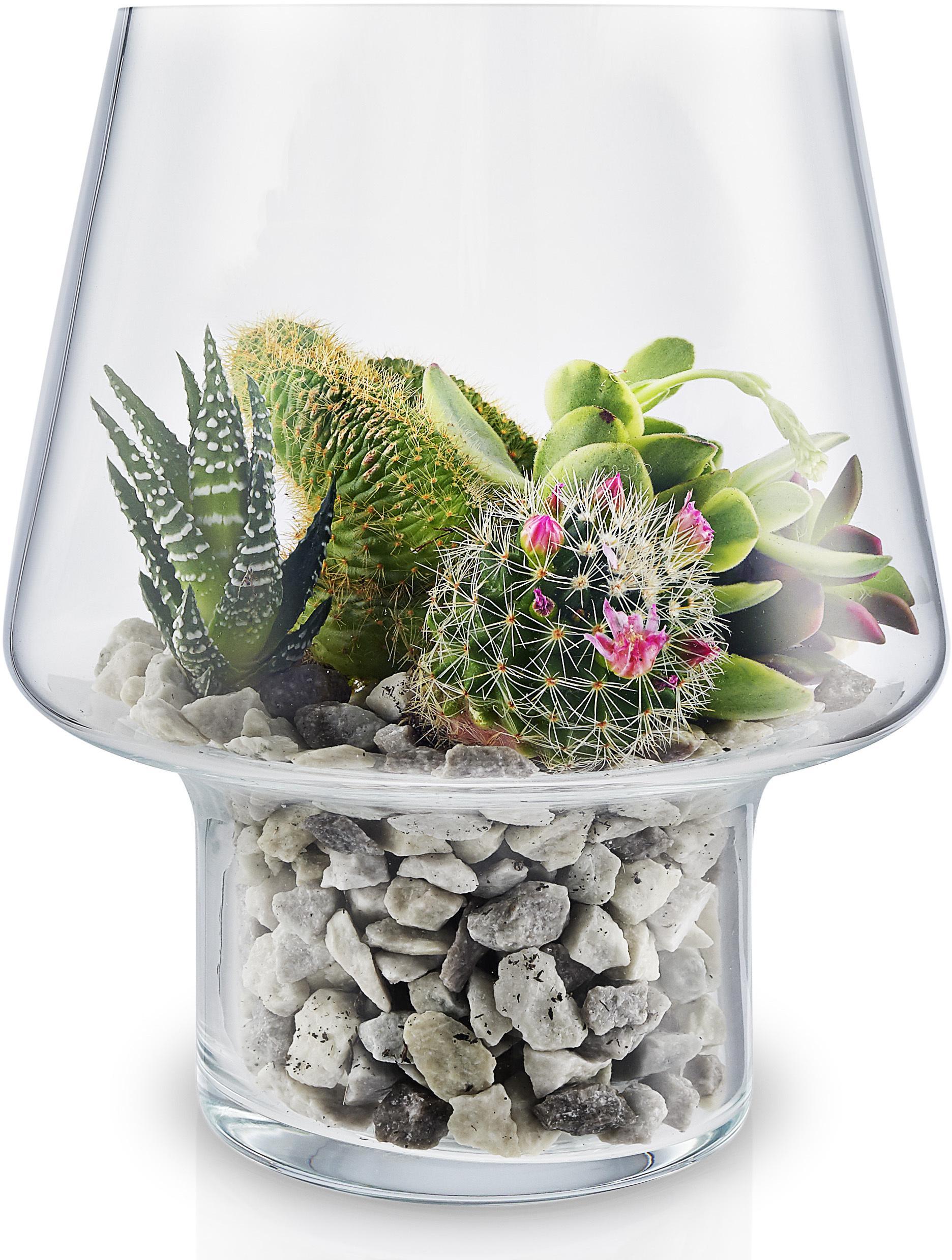EVA SOLO Skleněná váza na sukulenty 15 cm