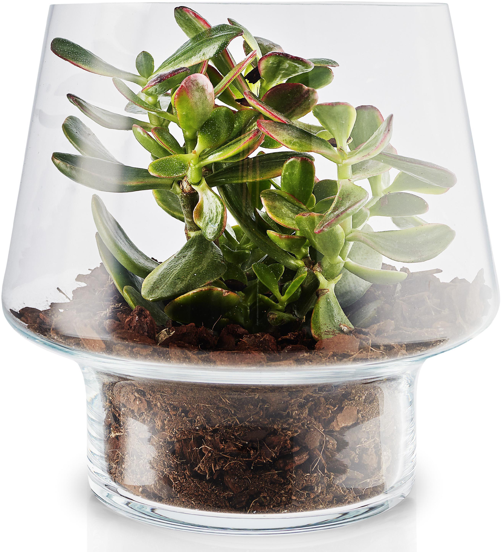 EVA SOLO Skleněná váza na sukulenty 21 cm