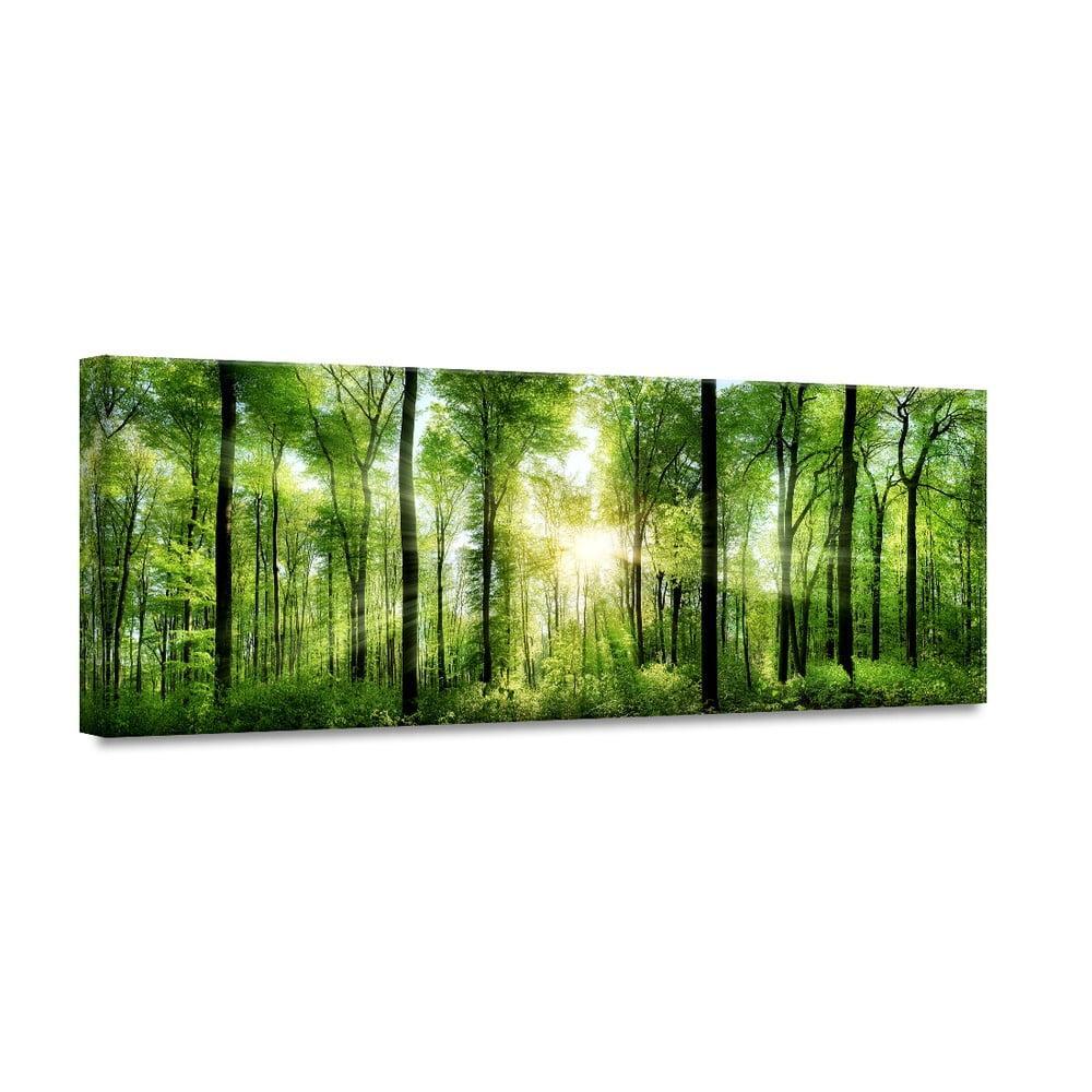 Obraz Styler Glasspik Nature Sunlight, 50 × 125 cm