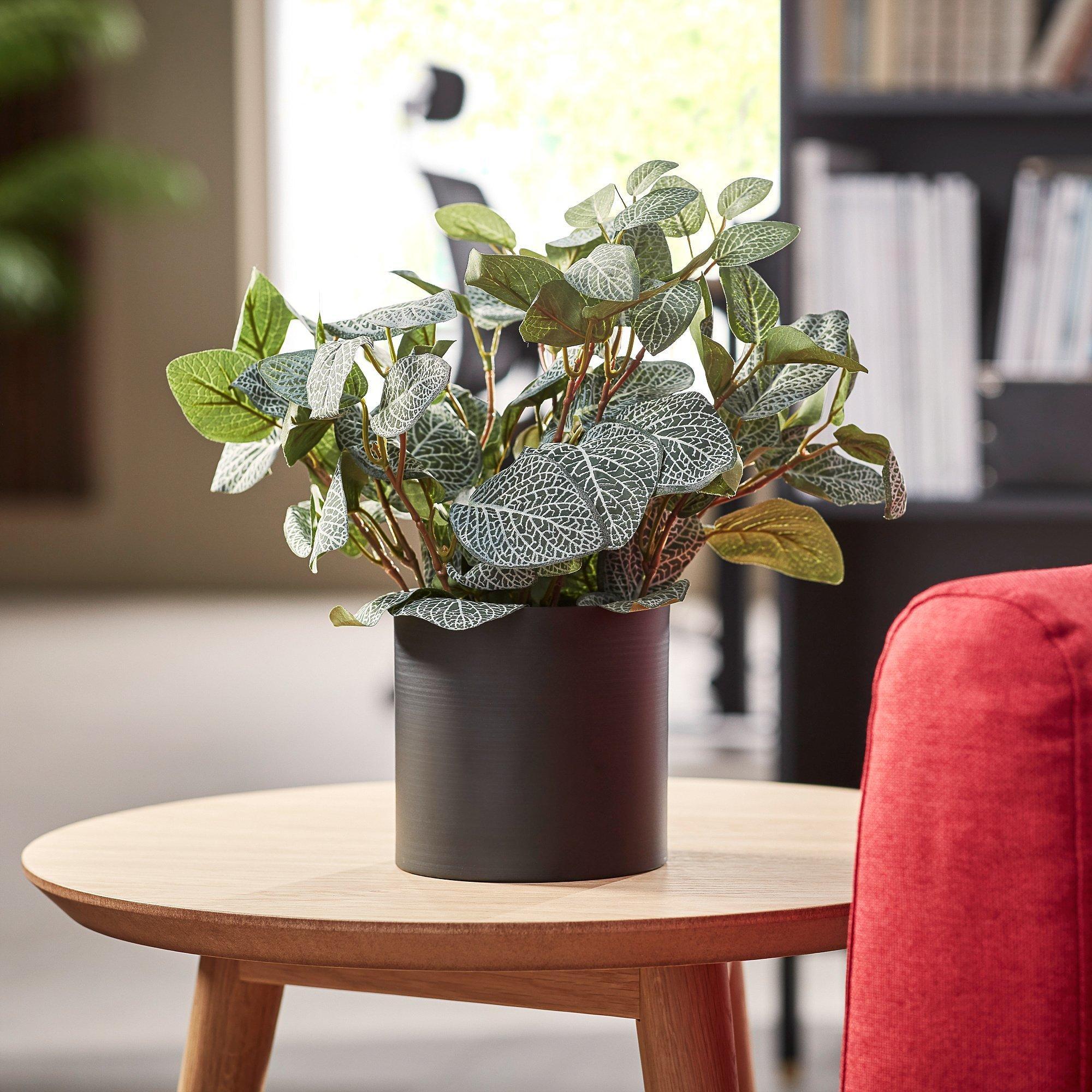 Umelá rastlina: Fitónia, 340 mm, čierny oceľový kvetináč