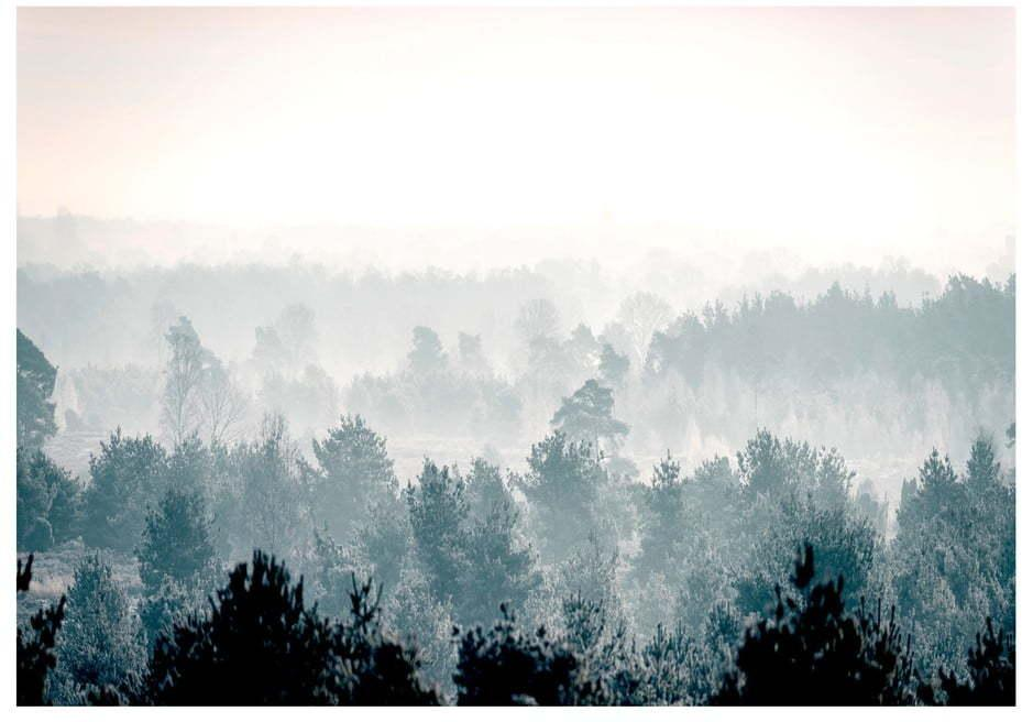 Veľkoformátová tapeta Artgeist Winter Forest 400 x 280 cm